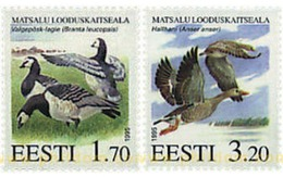Ref. 85539 * MNH * - ESTONIA. 1995. NATURE RESERVE OF MATSALU . RESERVA NATURAL DE MATSALU - Birds