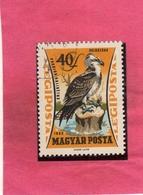 HUNGARY UNGHERIA MAGYAR 1962 AIR MAIL POSTA AEREA BIRDS FAUNA AVICOLA OSPREY BIRD FALCO PESCATORE 40f USATO USED OBLITER - Posta Aerea