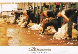 Shearing Sheep, Moree, New South Wales - Unused - Australie