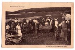 2141 - Savigny Les Beaune ( 21 ) -Vendange En Bourgogne - Stephen - - Frankreich