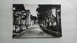 Carnac Plage Avenue Miln Morbihan Yvon - Carnac
