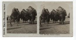 Ancienne CARTE Vue Stéréoscopique Vues D'Algérie Biskra Chameaux Et Bassours - Fotos Estereoscópicas