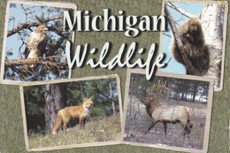 22E : Animal Hawk, Fox, Elk, Multiview Postcard Commercial Used With/ Without Postage Stamp - Animaux & Faune