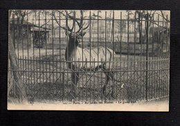 75 Paris / Zoo / Au Jardin Des Plantes / Le Grand Cerf - Parcs, Jardins