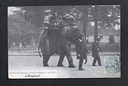 75 Paris / Zoo / Jardin Zoologique D'Acclimatation / L'Eléphant ( Promenade ) - Parcs, Jardins
