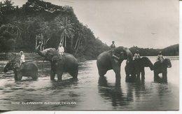 004811  Tame Elephants Bathing, Ceylon - Sri Lanka (Ceylon)