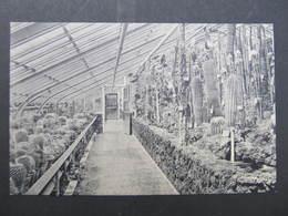 AK BERLIN DAHLEM Steglitz Botanischer Garten Ca.1910 Kakteen   ///  D*33615 - Dahlem