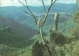 "Warrumbungle National Park (Australia) ""Koala"", ""Bread Knife"" In The Background - Australia"