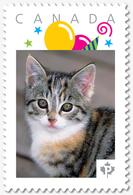 CAT, Cute KITTEN = Personalized Picture Postage Stamp, MNH Canada 2018 [p18-07s20] - Hauskatzen