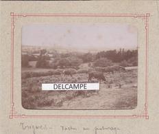 TREGASTEL 1880/90 - Photo Originale De La Ferme De Saint Gorgon, Vache Au Paturage ( Côtes D'Armor ) - Orte