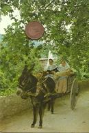 Un Burro En Mallorca Tirando De Un Carro. - Burros