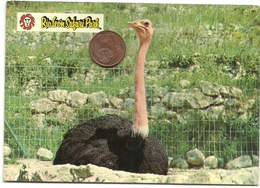 Rioleon Safari Park. Avestruz. Tarragona. - Birds