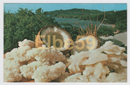 St. Lucia (Antilles) Coconut Candy And Sugar Cakes, A Speciality, Unused - Santa Lucia
