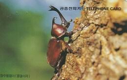Korea South - Insects - Xylotrupes Dichotomus - Korea, South