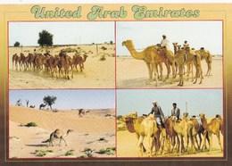 Unites Arab Emirates  Emirats Arabes Unis Multi Vues Troupeaux Chameaux N°133 TBE - Emirats Arabes Unis
