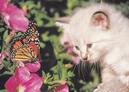 Butterfly & Cat - Papillon - Vlinder - Schmetterling - Farfalla - Borboleta - Mariposa - Animal - Butterflies