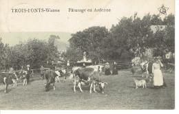 Trois Ponts Wanne Paturage En Ardenne Troupeau De Vaches - Trois-Ponts