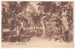 Bananeraie (Guinée Française) - Guinée Française