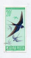 """UNGHERIA - 1966 - Francobollo Tematica """" Animali - Uccelli """" -  Usato - (FDC10924) - Swallows"""
