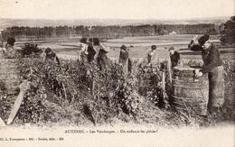 AUXERRE LES VENDANGES ON ENFONCE LES PIECES ! - Auxerre