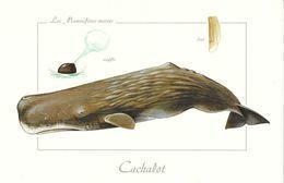 *    Les Mammifères Marins - Cachalot - Vissen & Schaaldieren
