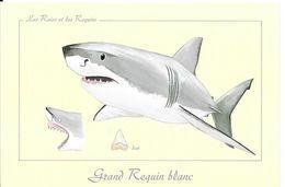 *  Les Raies Et Les Requins - Grand Requin Blanc - Vissen & Schaaldieren