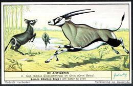LIEBIG - NL - 1 Chromo N° 3 - Série/Reeks S 1559 - DE ANTILOPEN: Cob En Oryx - Les Antilopes. - Liebig