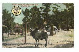 Scenes From The Zoo, Grant Park, Atlanta, Georgia Mark On The Back - Atlanta