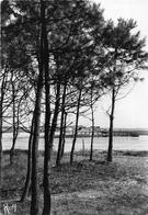 ¤¤  -   LA BARRE-de-MONT   -   FROMENTINE  -  Vue Sur La Fosse Prise Dans Les Bois     -  ¤¤ - France