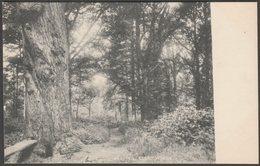 Glory Woods, Dorking, Surrey, C.1902 - Frith's U/B Postcard - Surrey
