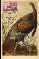 36420 U.s.a. Maximum 1956  Wildlife Conservation, Wild Turkey - Cartoline Maximum
