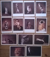 Lot De 13 Cartes Postales CHATS / Yann ARTHUS BERTRAND - Gatti