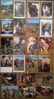 Lot De 22 Cartes Postales VACHES TRAITE PAYSANS - Elevage