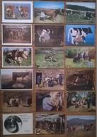 Lot De 18 Cartes Postales VACHES TRAITE PAYSANS /b - Elevage