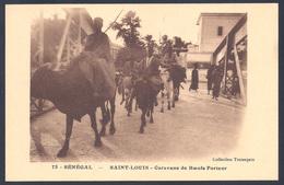 SENEGAL SAINT LOUIS Caravane De Boeufs Porteur - Sénégal