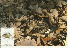 Carte Maximum - Oiseaux - Portugal - Açores - Galinhola - Becasse Des Bois - Scolopax Rusticola - Tarjetas – Máximo
