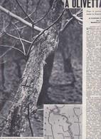 (pagine-pages)OLIVETTA SAN MICHELE      Settimogiorno1962/10. - Altri