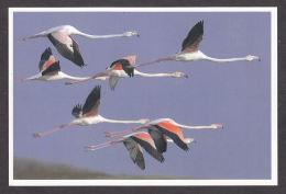 89726/ OISEAUX, Flamants Roses En Vol - Oiseaux
