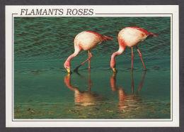 89727/ OISEAUX, Flamants Roses - Oiseaux