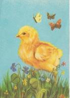 Birds, Oiseaux, Vogel, Unused - Oiseaux