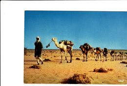 REPUBLIQUE DU NIGER CARAVANE SUR LA ROUTE D'IN GALL Superbe CPSM 15X10.5 Bon état Voir Scans - Niger