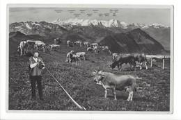 20377 - Rigi Kulm Jos. Kuster Preisalphornbläser Alpnach Cor Des Alpes Kühe Vaches - LU Lucerne