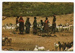 DJIBOUTI--1997--Ravitaillement En Eau  (animée, Troupeau De Chèvres) - Djibouti