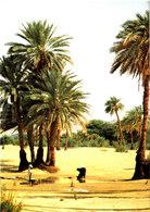 REPUBLIQUE DU NIGER PALMERAIE DE BILMA Superbe CPSM 15X10.5 Bon état Voir Scans - Niger