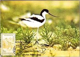 RESERVA DE LA BIOSFERA Delta Dunarii. Recurvirostra Avosetta. Avoceta. Tulcea 1991 - Protección Del Medio Ambiente Y Del Clima