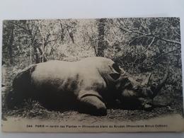CPA RHINOCEROS BLANC DU SOUDAN JARDIN DES PLANTES PARIS 244 - Rhinocéros
