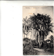 Dahomey, Palmiers à Huile à Plusieurs Branches. Post Card Inused - Benin