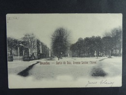 Bruxelles Sortie Du Bois, Avenue Louise, L'hiver - Forêts, Parcs, Jardins