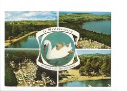 20388 - Salavaux Un Petit Coin De Paradis Cygne Et Petits - VD Vaud