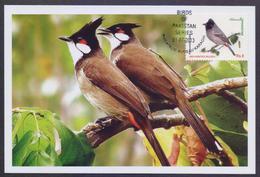 PAKISTAN MAXIMUM CARD - RED VENTED BULBUL, Birds Of Pakistan 2013 - Oiseaux